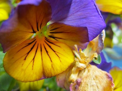 FlowerSunshineLBerezin
